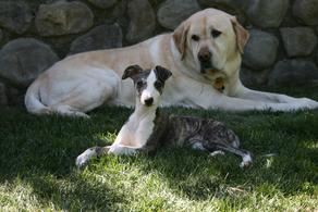 Pups and elders alike find the sun garden the perfect place to relax.