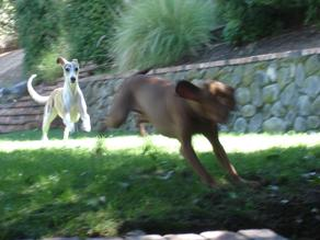 Active dogs relish the variety of runs at Nysa.